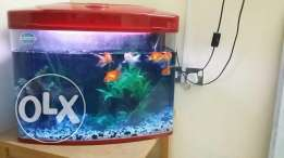 Fish Aquarium Sale (with 6 gold fishes and table) - RO 50