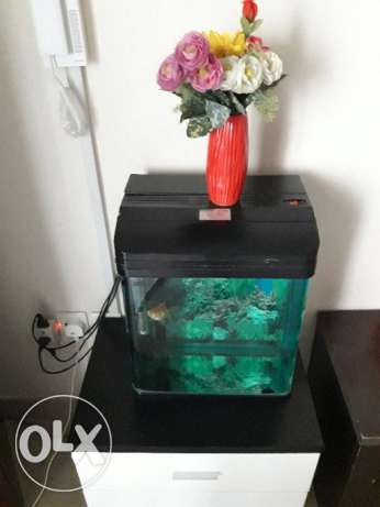 Fish tank with one gold fish